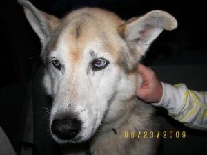 Izzy and stray dog 008